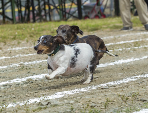 Wiener Takes All: A Complete Guide to Race Training Your Adorable Dashchund